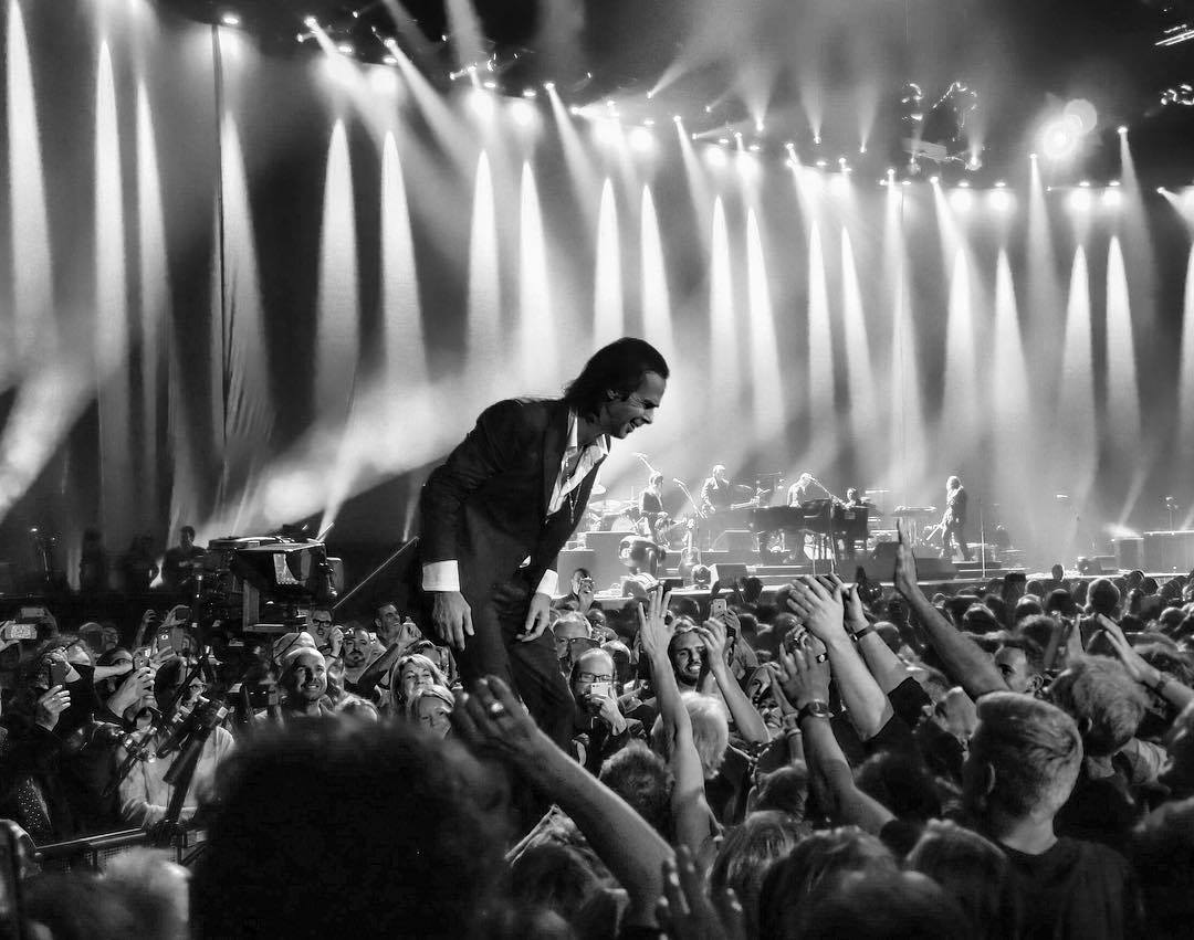 buch nick cave