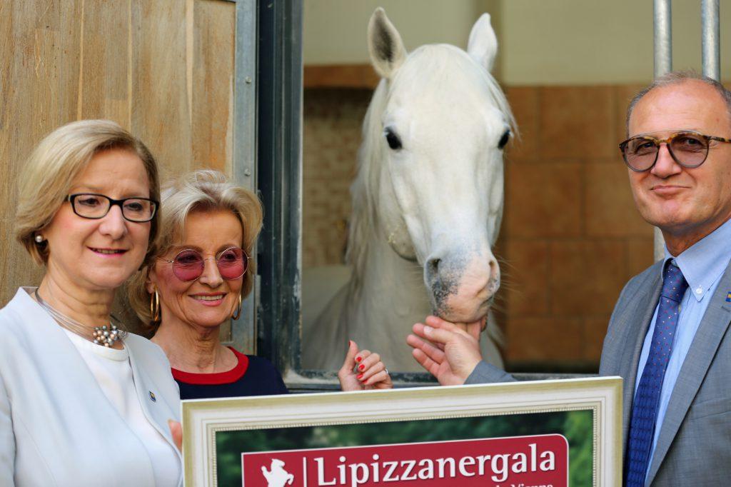 lipizzanergala5